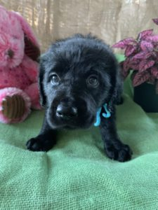 <h6>Girl Teal <br> ♥ 6 Weeks<br> Available!